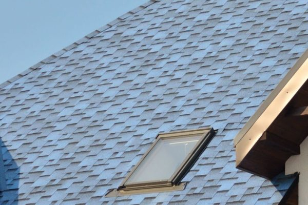 Pigeon blue roof tiles